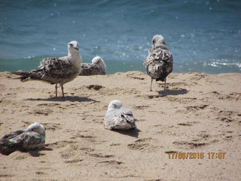 Oiseaux vus au Portugal F4326110