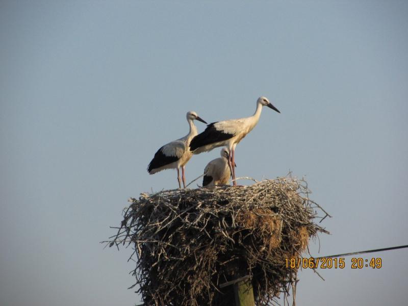Oiseaux vus au Portugal F5508310