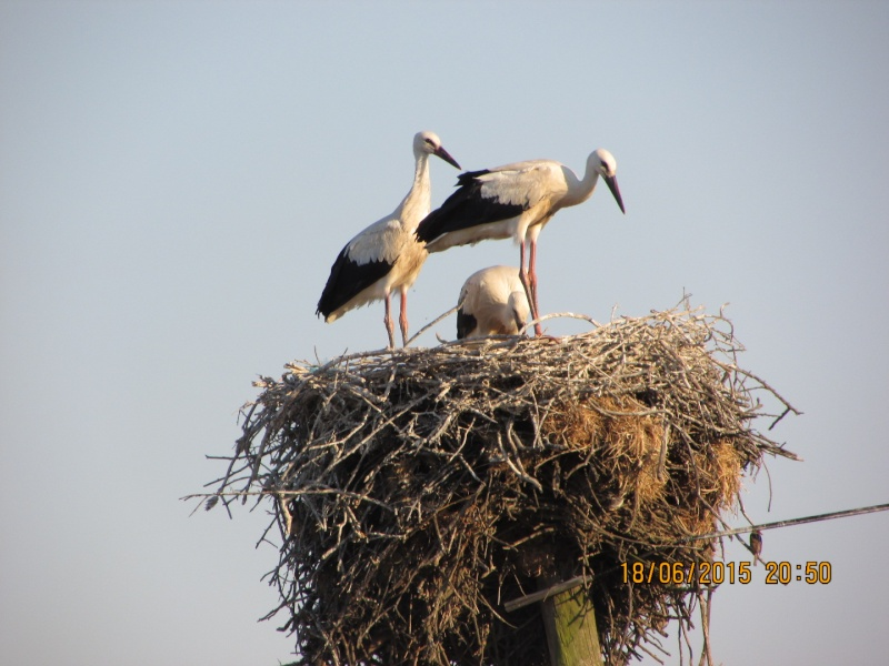Oiseaux vus au Portugal F5517510