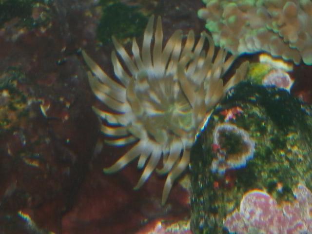 identification coraux P7211810
