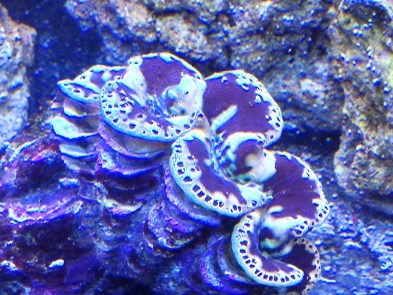 Reef de Gégé84 - Page 2 28252210