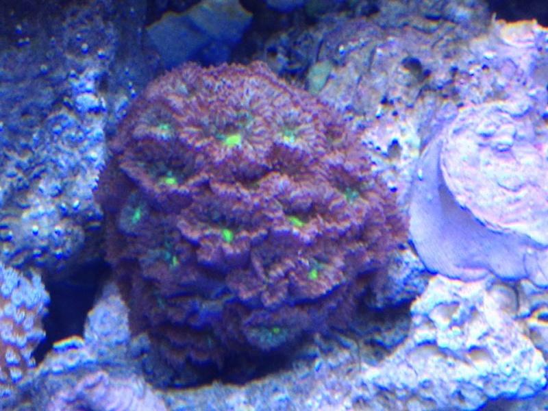 Reef de Gégé84 - Page 2 34999310