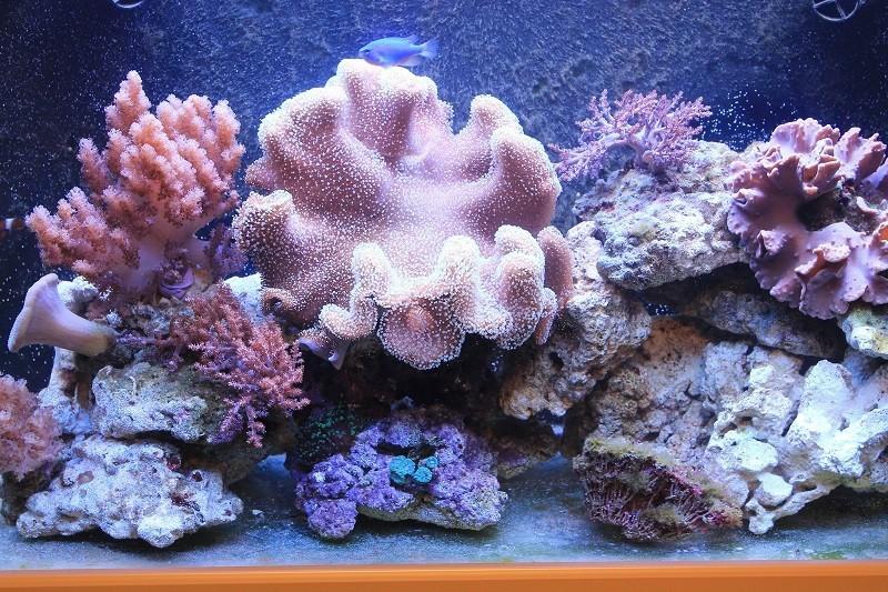 Reef de Gégé84 - Page 2 44775710