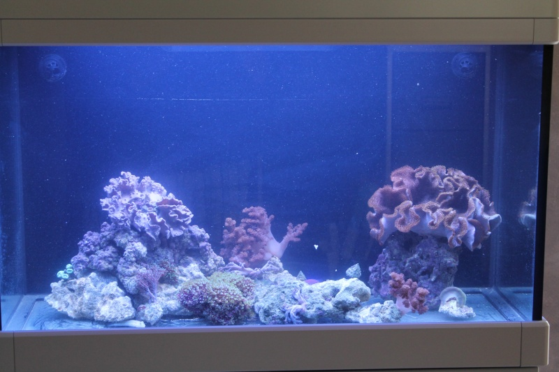 Reef de Gégé84 58013910