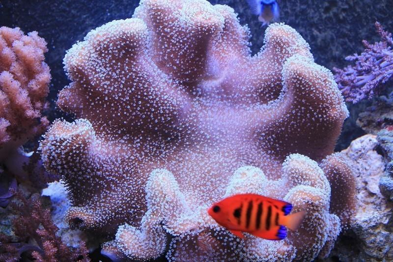 Reef de Gégé84 - Page 2 68760010