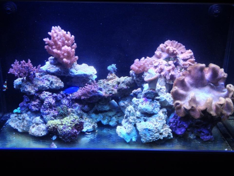 Reef de Gégé84 - Page 2 79482710