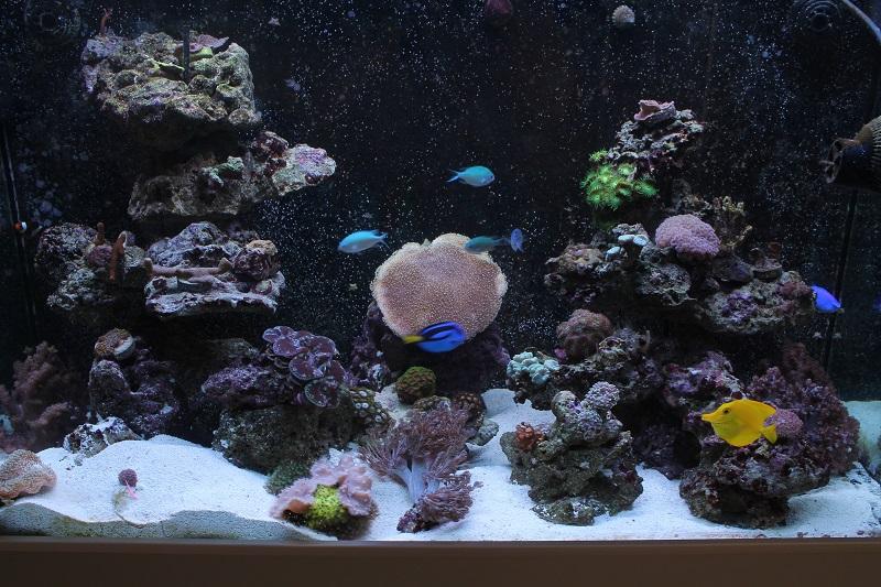 Reef de Gégé84 - Page 3 Img_2015