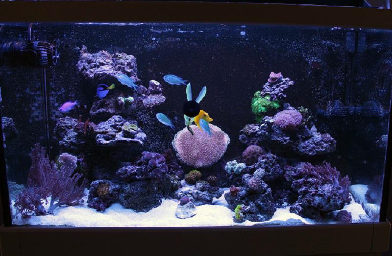 Reef de Gégé84 - Page 3 Img_2711