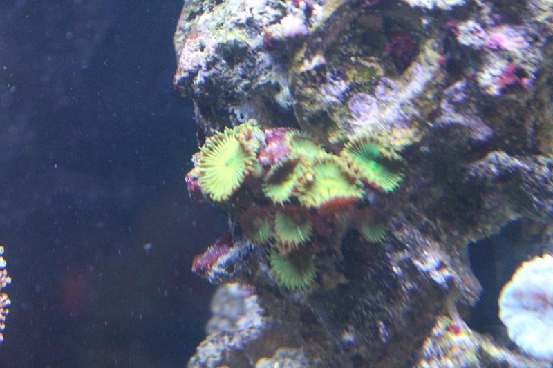 Reef de Gégé84 - Page 2 Palyth11
