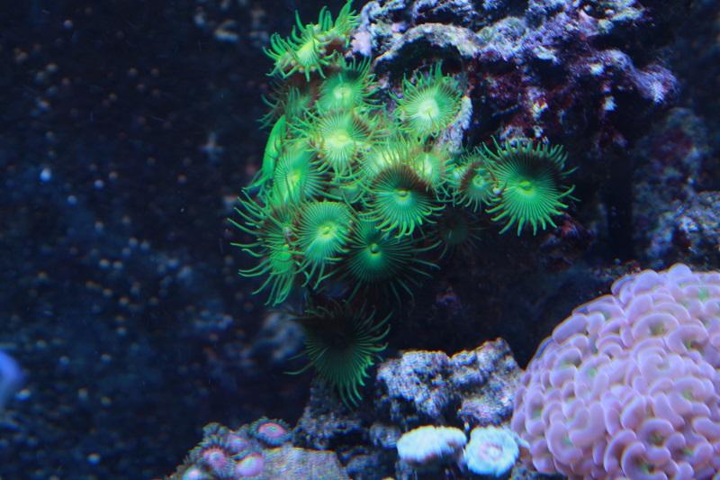 Reef de Gégé84 - Page 3 Palyth15