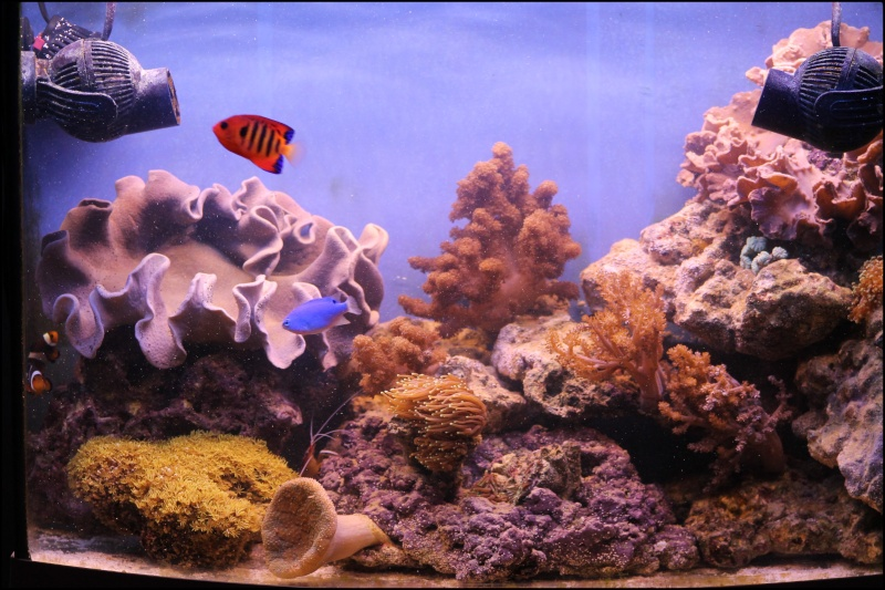 Reef de Gégé84 Reefma11