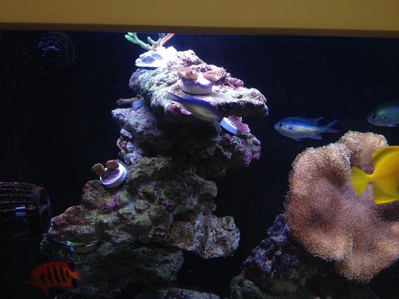 Reef de Gégé84 - Page 2 Vue_d_10