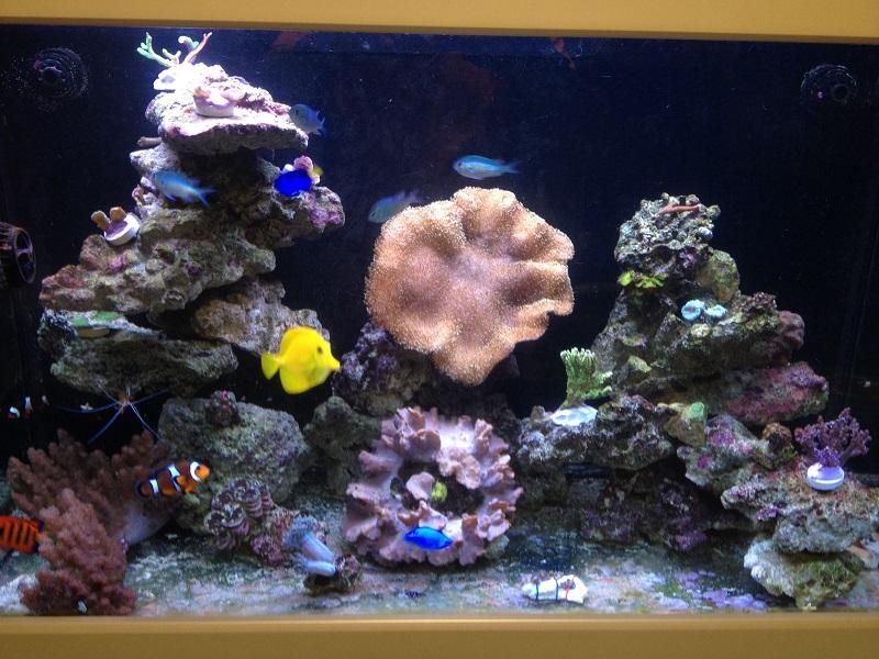 Reef de Gégé84 - Page 2 Vue_d_12