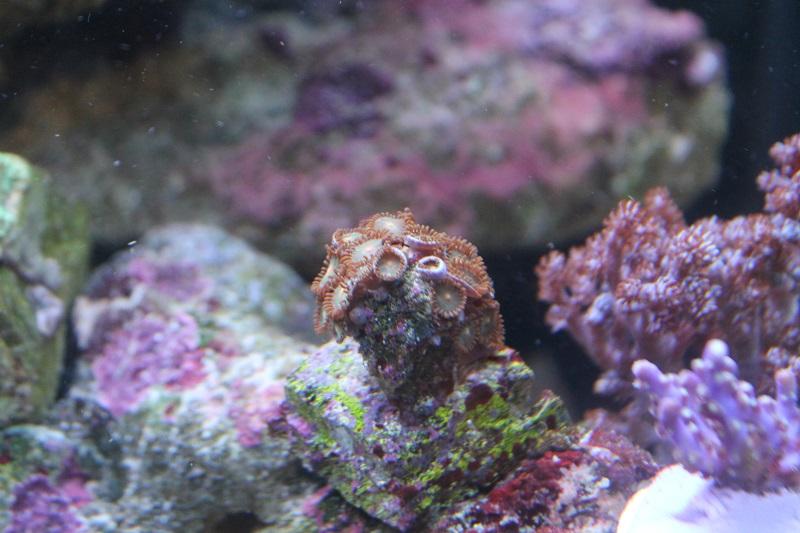 Reef de Gégé84 - Page 2 Zozo_210