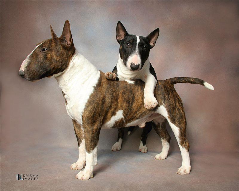 Les chiens de vos rêves en photos! Brown-10