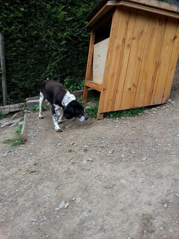 Petit Cachou dans sa nouvelle maison 10385410