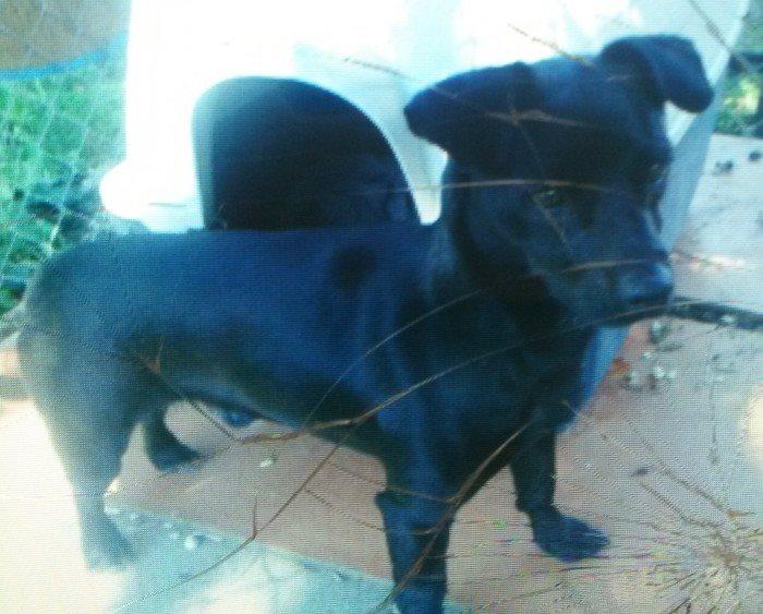 JORDY xFox noir 250269810673014 19021_10