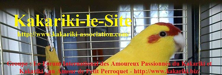 Kakariki , un amour de petit perroquet Marcel12