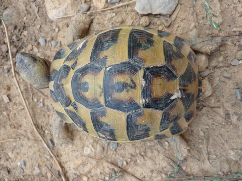 Nos deux tortues  P1050110