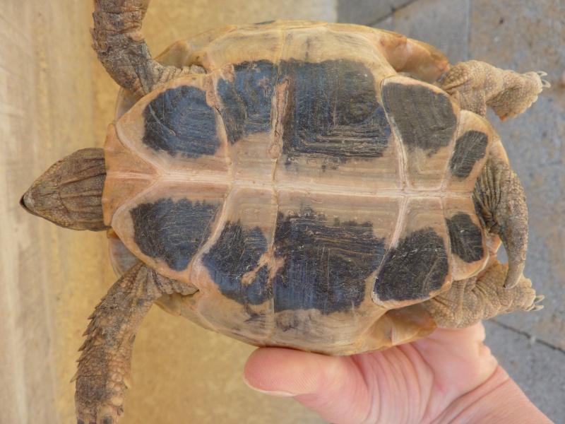 Nos deux tortues  P1050111