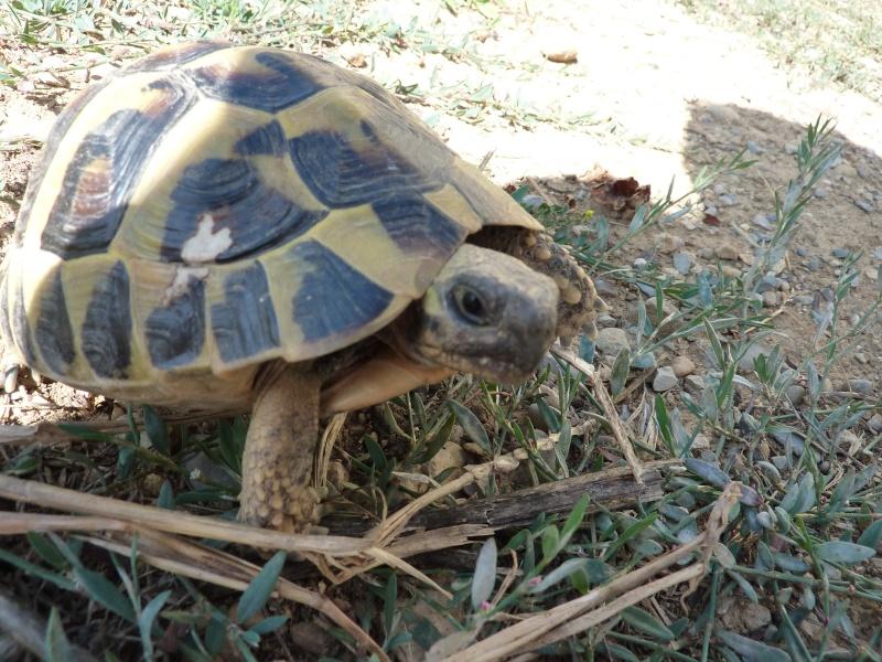 Nos deux tortues  P1050211