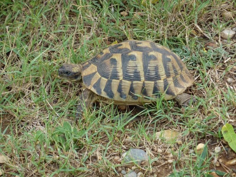 Nos deux tortues  P1050316