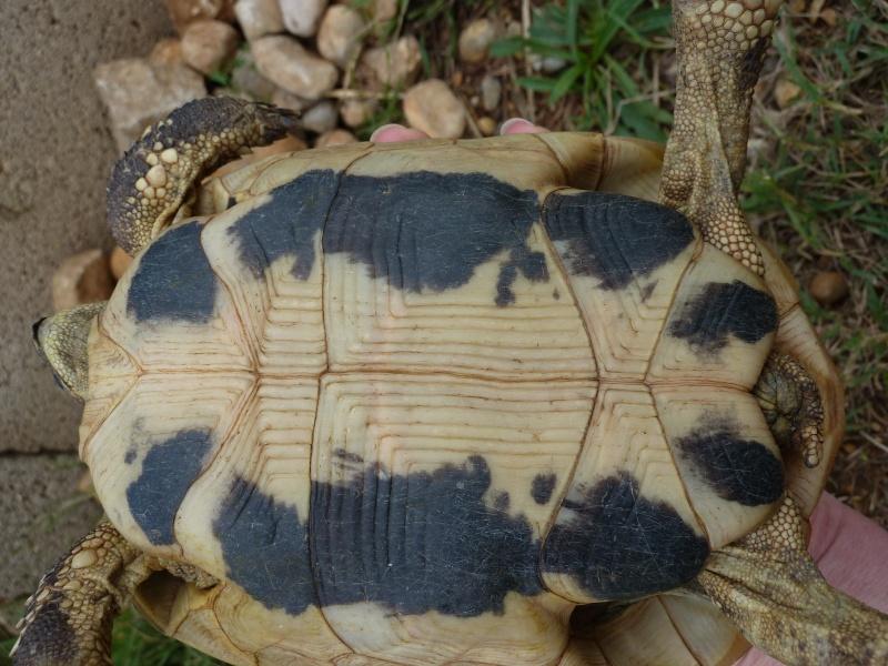 Nos deux tortues  P1050318