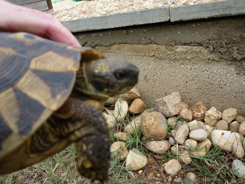 Nos deux tortues  P1050320