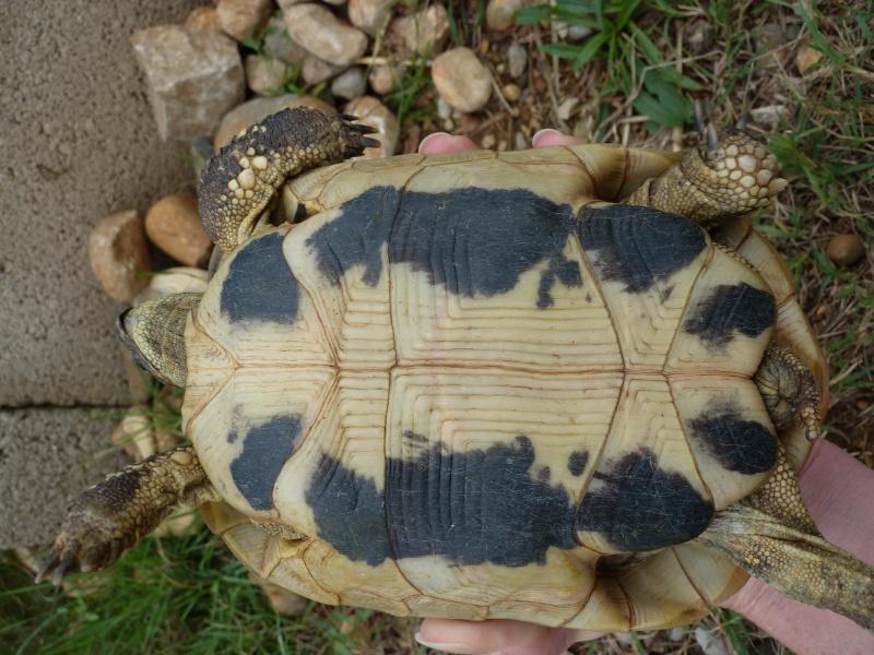 Nos deux tortues  P1050321