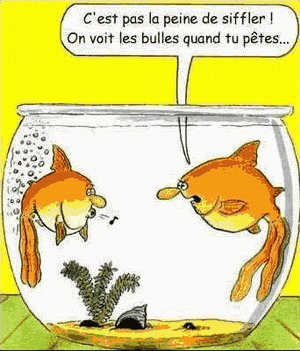 HUMOUR EN IMAGES - Page 5 Humour10