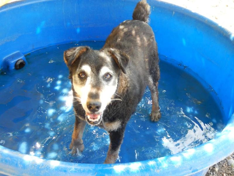 PAPY (mâle type jagd terrier) - Candidat FA Dscn5014