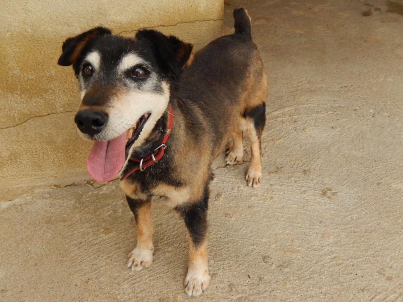 PAPY (mâle type jagd terrier) - Candidat FA Dscn5410