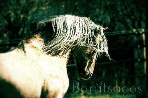 Baràtsagos - Falarion ♂  Signa12