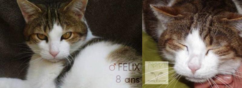 FELIX 8 - croquettes urinaires Felix10