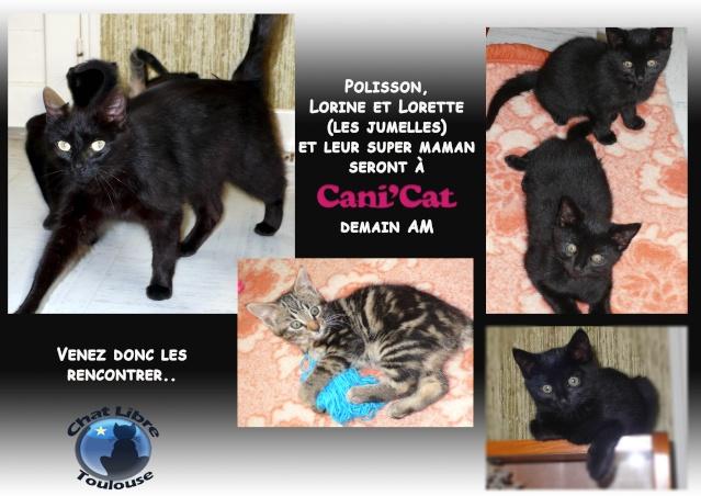 [ Adoptions ] Tous les samedis 14h - 18h chez CANICAT  - Page 2 Anicat10