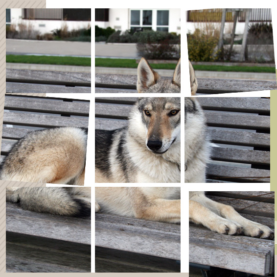 Les chiens de vos rêves en photos! Chiens10