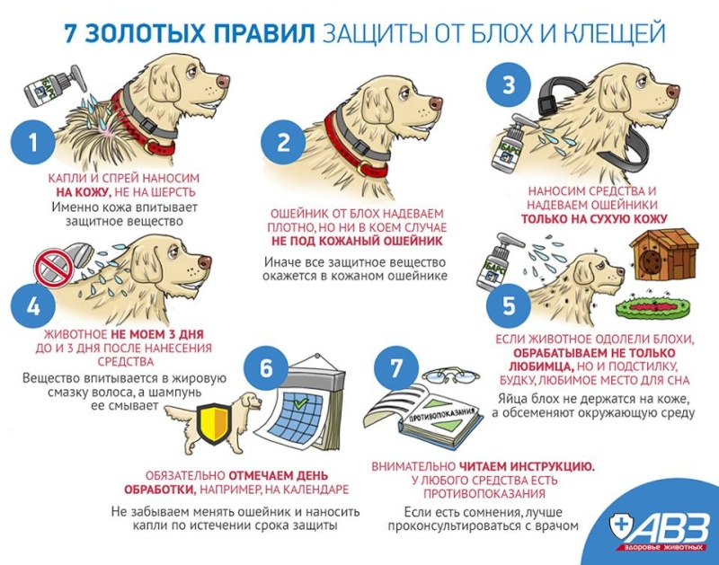 Как правильно обработать щенка-собаку от блох-клещей 11046410