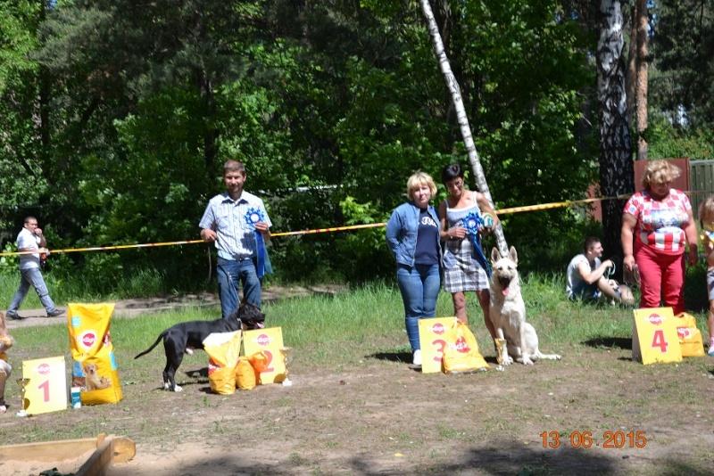 """выставка - 13-06-2015 Национальная выставка собак  """"День России 2015"""" эксперт Тишина Т. Dsc_0432"""