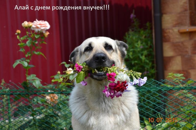 АМАНАУЗ НОРТОН-АЛАЙ - Страница 7 Dsc_0521