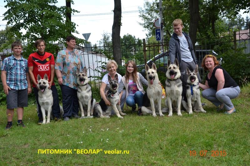 """19-07-2015 """"Кубок Звездного пса 2015"""" САС Dsc_0634"""