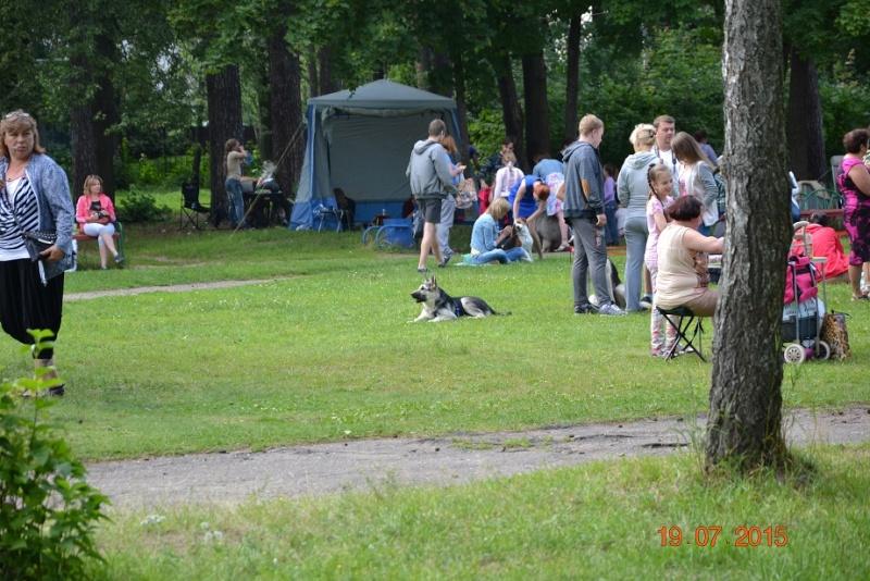 """19-07-2015 """"Кубок Звездного пса 2015"""" САС Dsc_0722"""