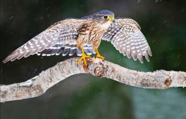 Помочь «ленивой» птице 156