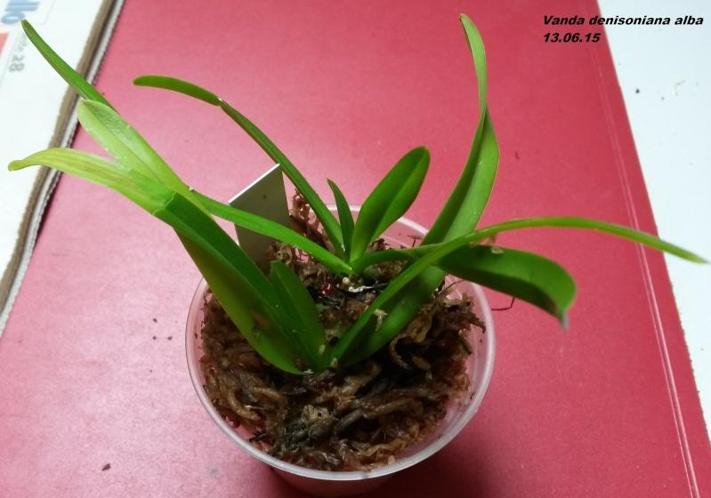 Orchideen-Neuzugang - Seite 6 20150617