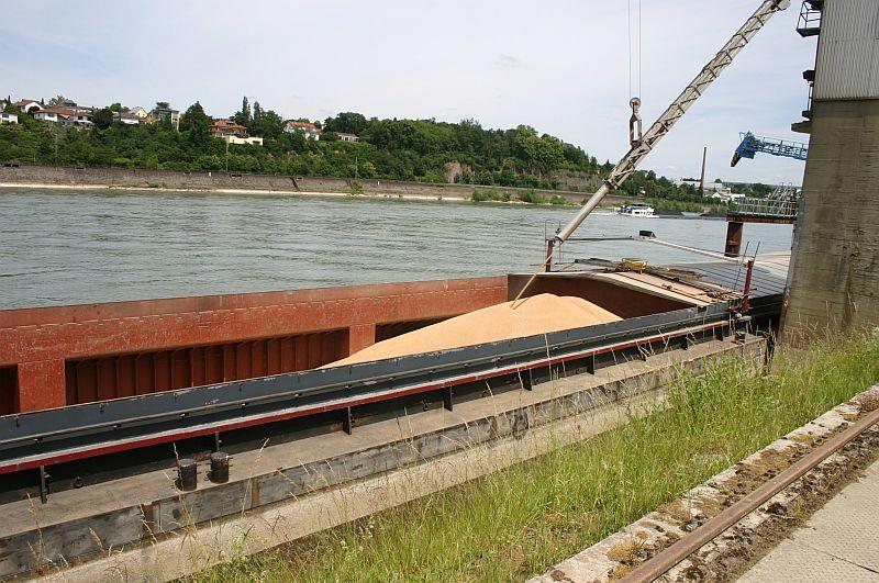 Kleiner Rheinbummel am 17.06.15 in Andernach und Koblenz 32d10