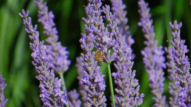 Visiteurs du jardin Img_0410