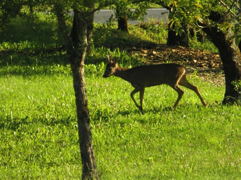 Visiteurs du jardin Img_3510