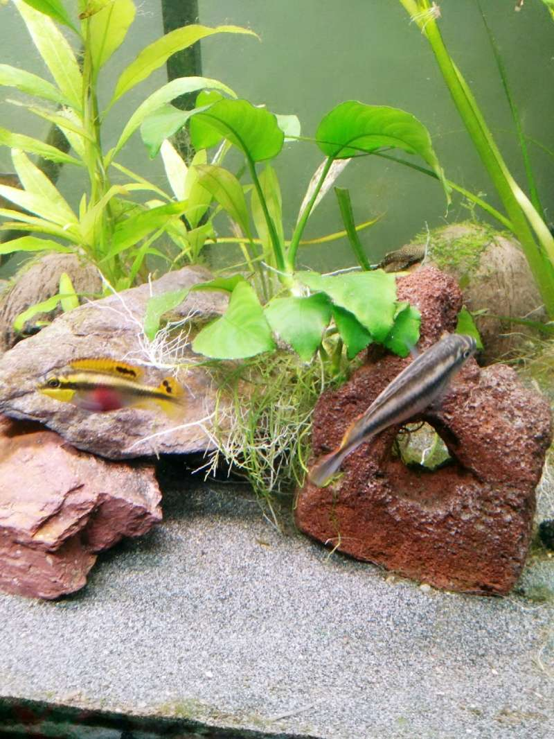 présentation de mes bac et poissons 2015-011
