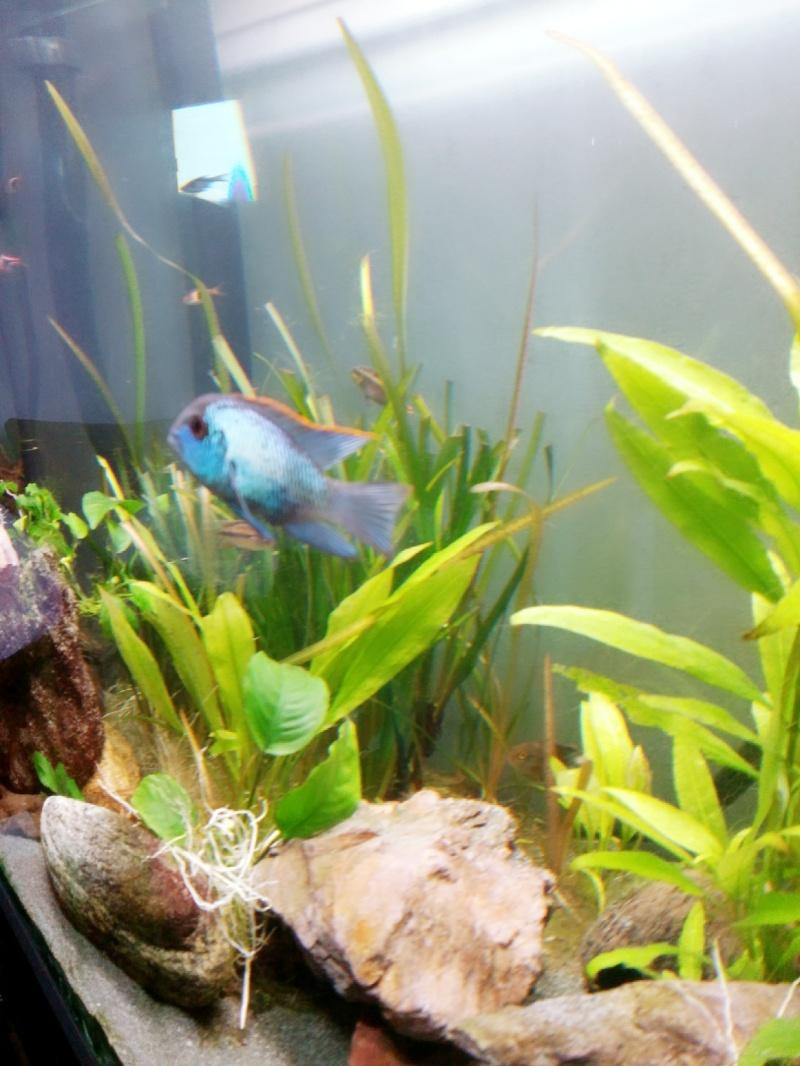 présentation de mes bac et poissons 2015-012