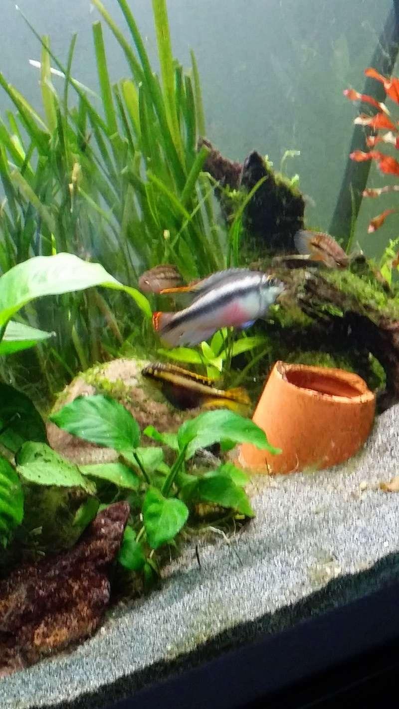 présentation de mes bac et poissons Image11