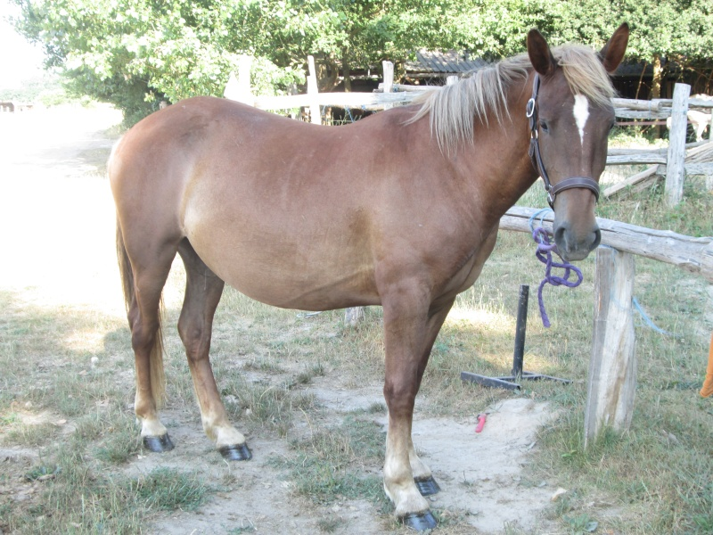 Le cheval toiletté Img_0311